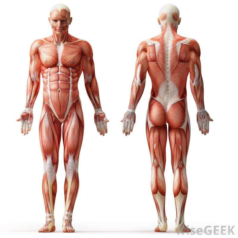 Anatomy Dummy