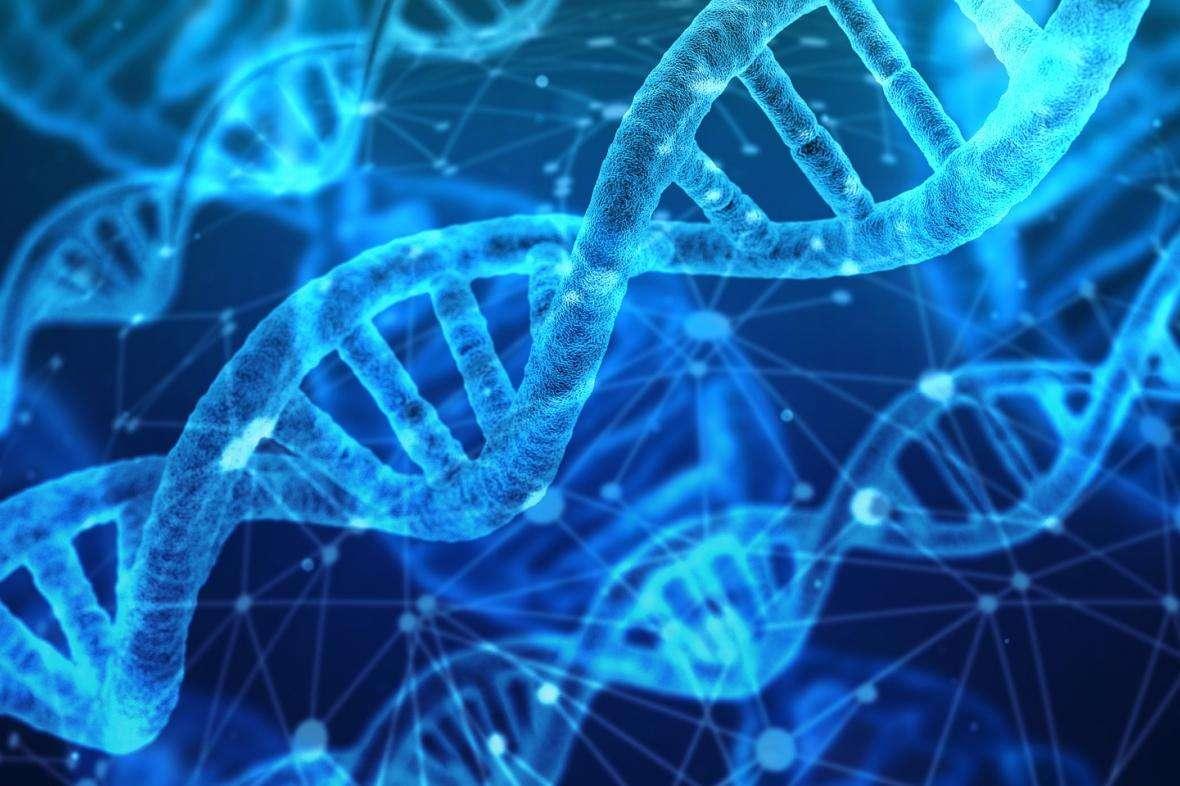 Genetyka puzzle online
