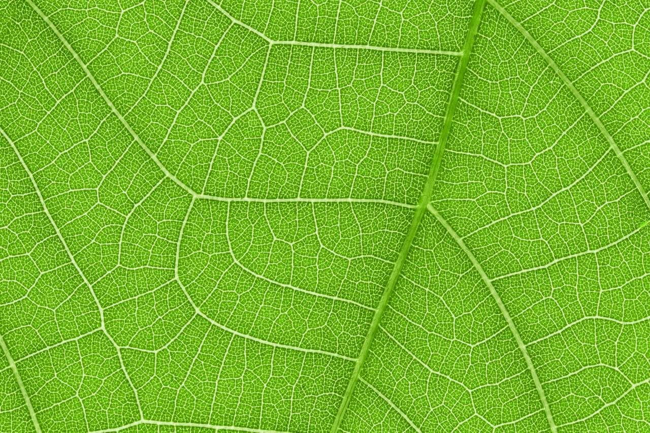 Beautiful leaf close up