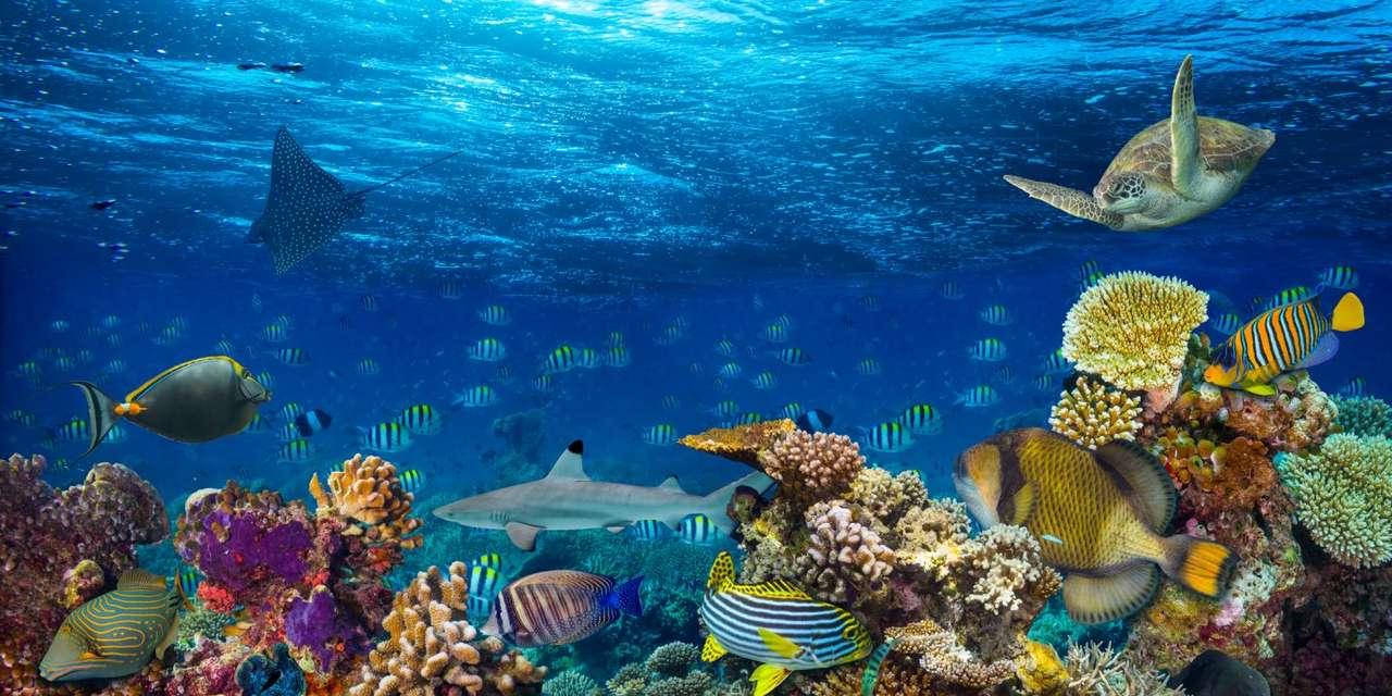 Oceanife.