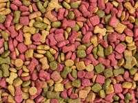 Mozaika dla psów