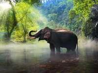 Dziki słoń w prowincji Kanchanaburi
