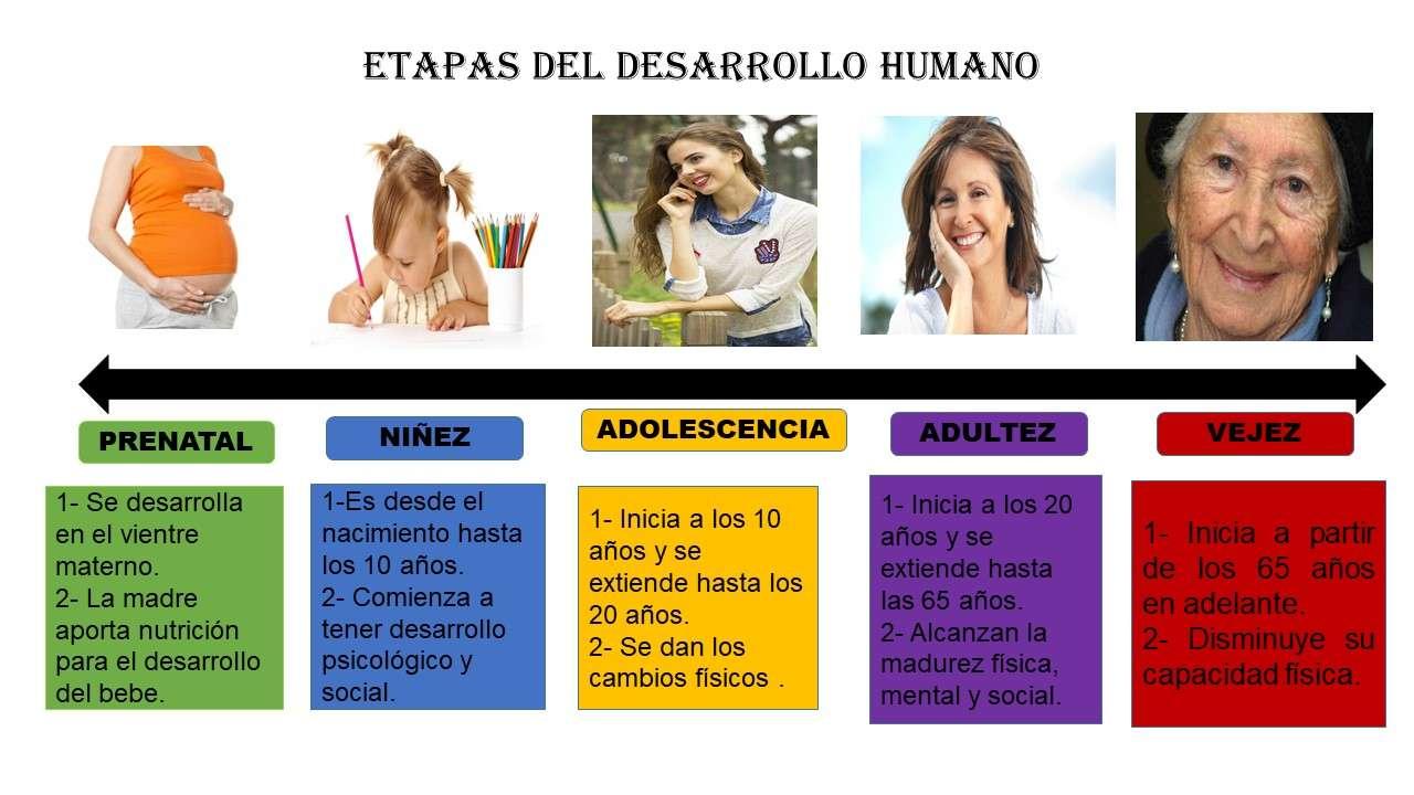 Etapy rozwoju człowieka