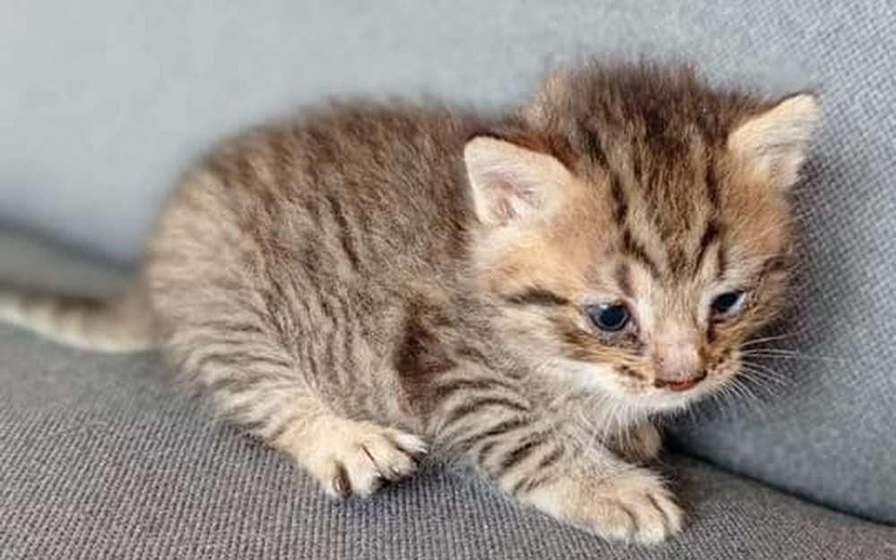 Kotek Znaleziony na wysypisku