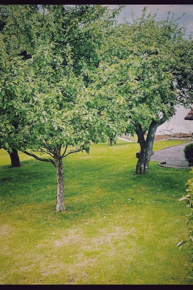 Drzewa w Niemcy