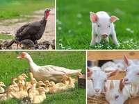 Фарма животиња.