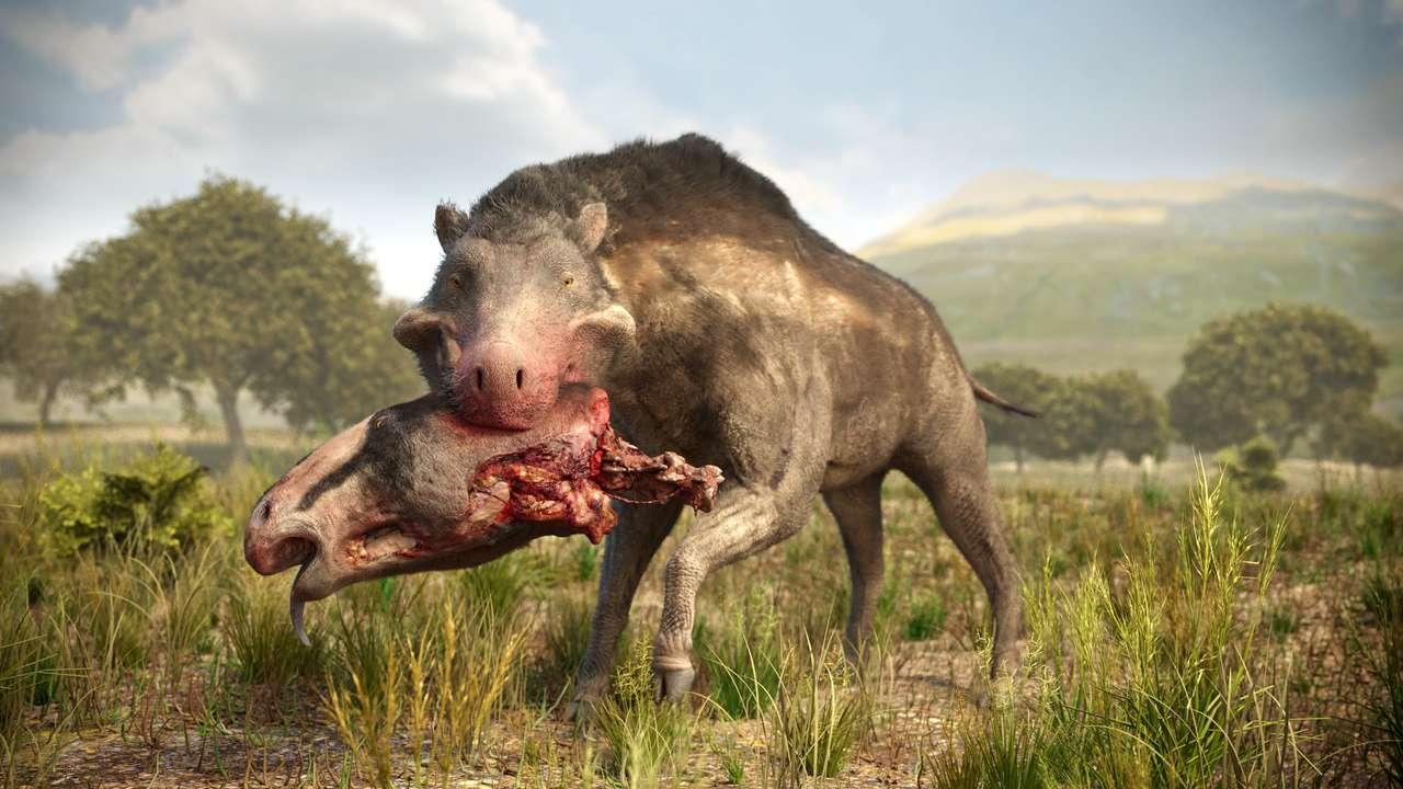 straszna świnia