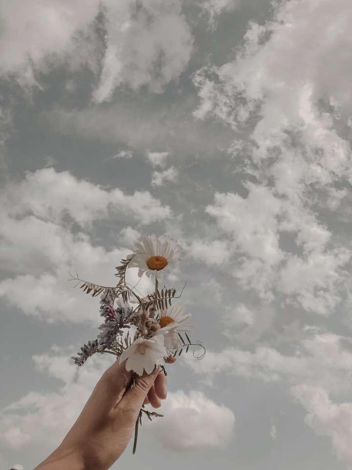 Kwiaty w chmurach