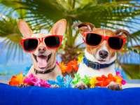 Kilka psów na wakacje :)