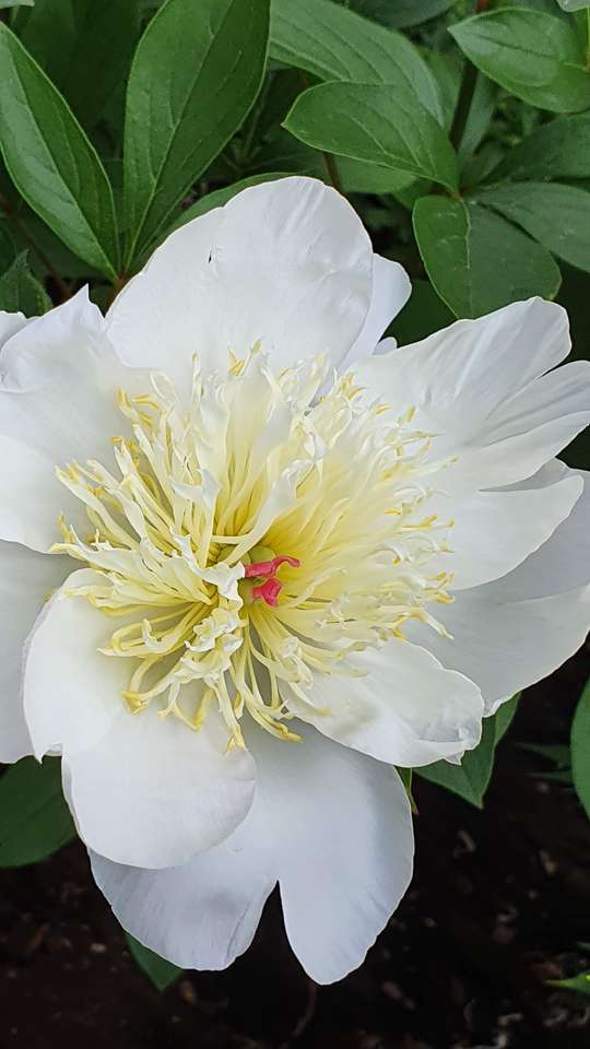 Kwiat dla Anne-Fleur