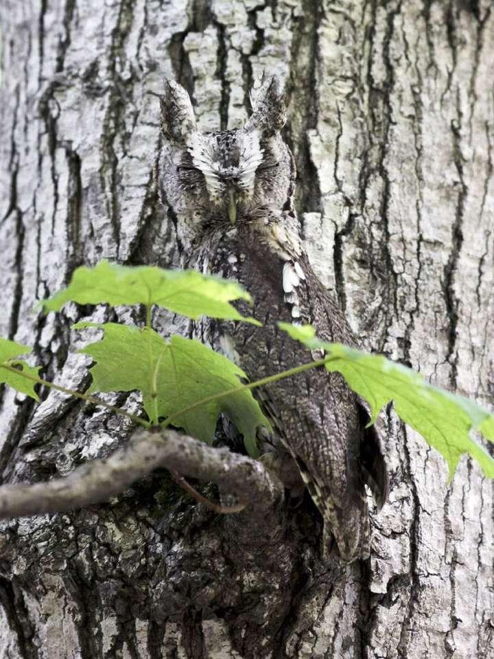 Owlcamouuflage.