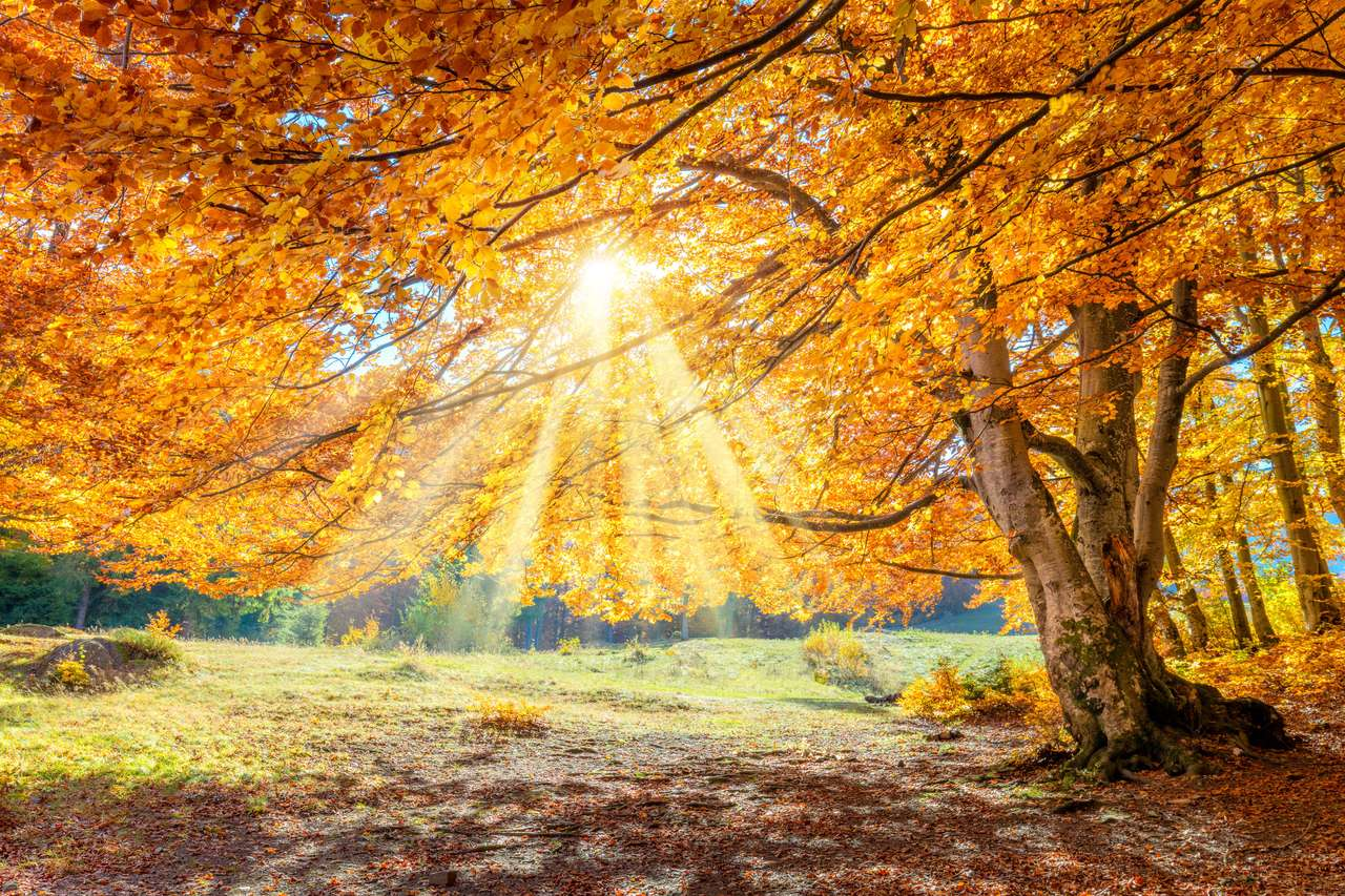 Fantastyczny jesienny krajobraz