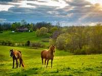Piękne kasztanowe konie