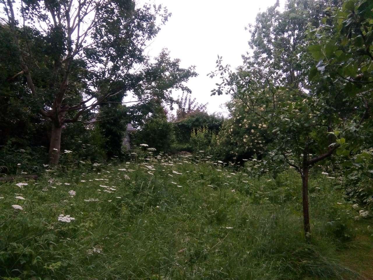 Ogród w Wielkiej Brytanii