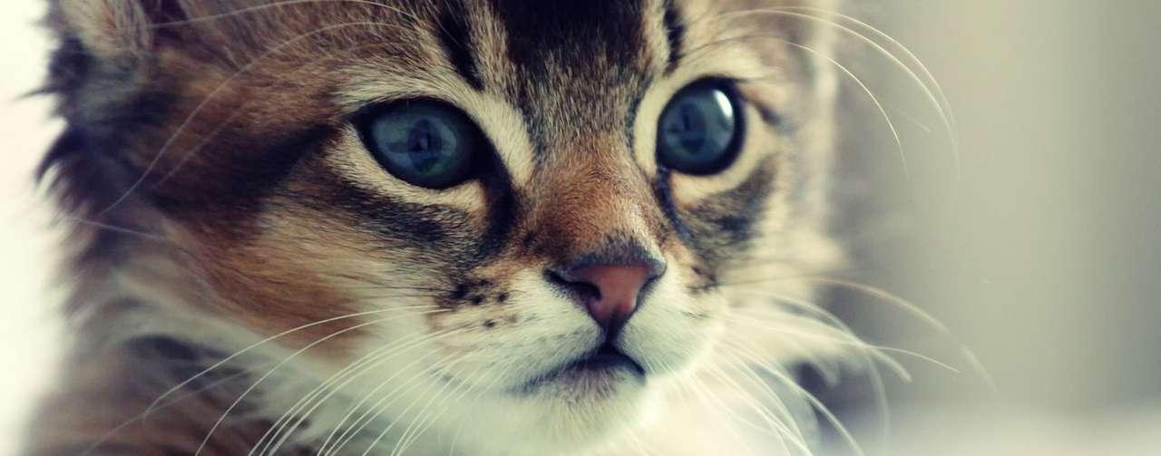 Kittyhtf.
