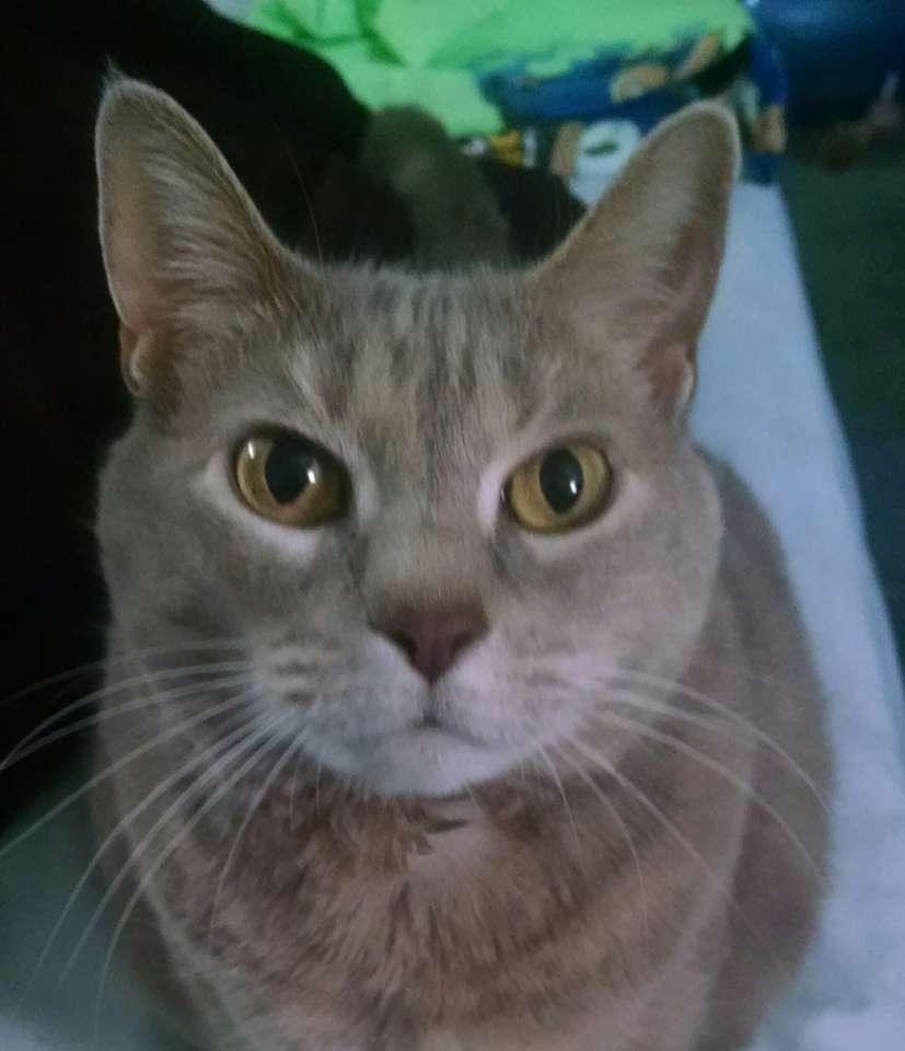 Mój kot o imieniu Kitty puzzle