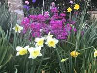 Ogród z przodu