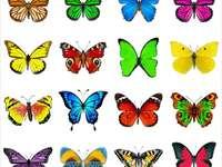 Barwne motyle