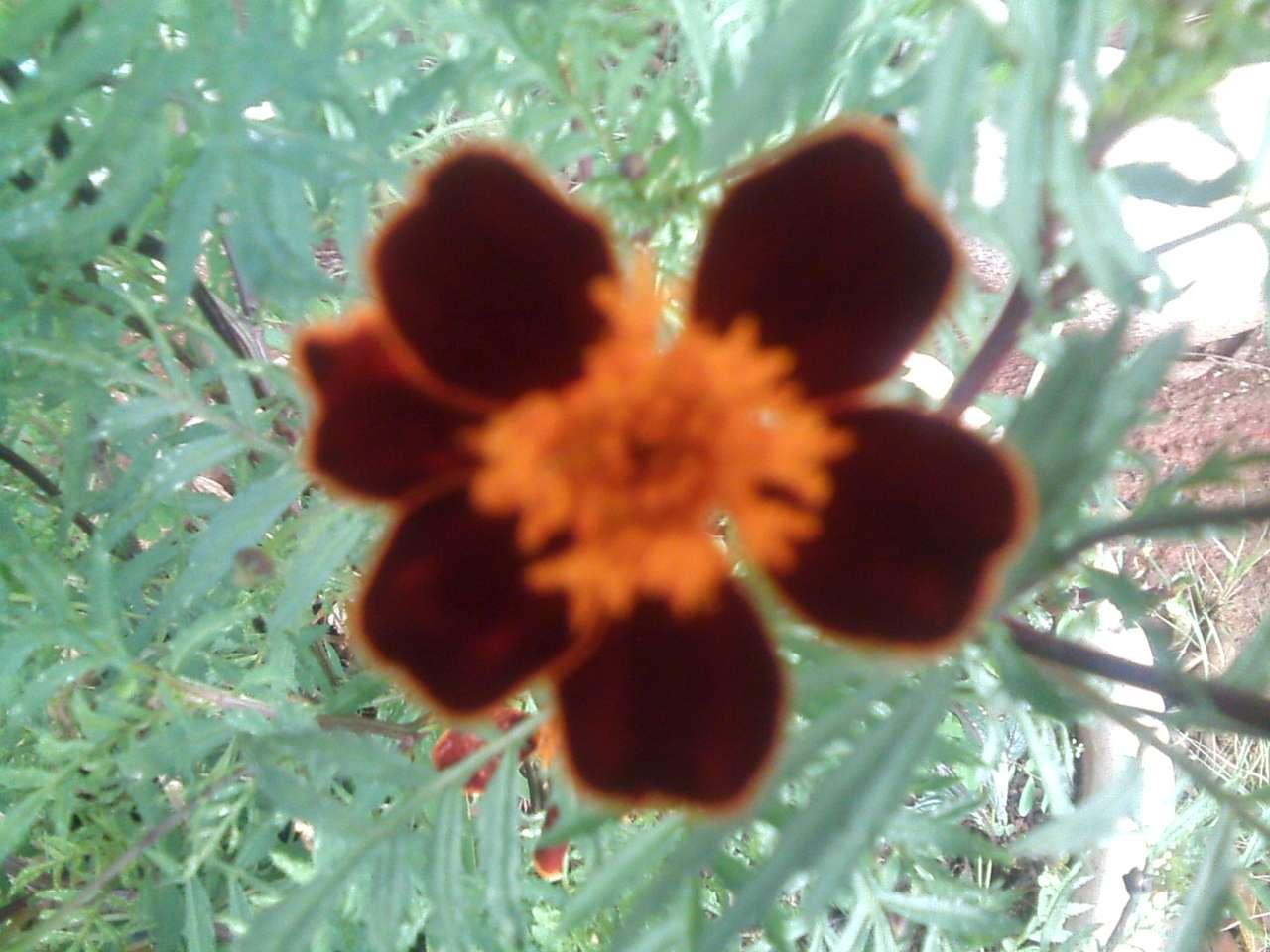 Piękny kwiat puzzle ze zdjęcia