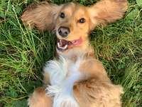 Uśmiech psa