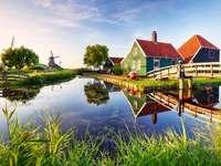wiatrak w holenderskim krajobrazie przyrody